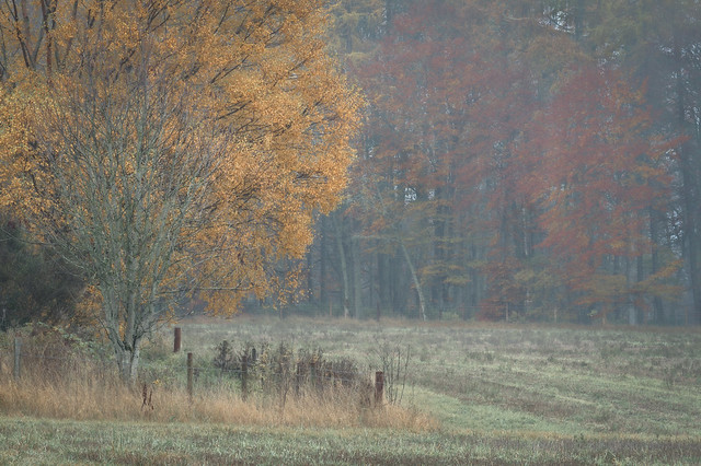 soft light, autumn | Bennybeg | Perthshire