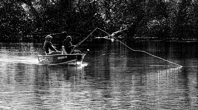 Fishin' The Shallows