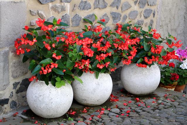 Tris di fiori