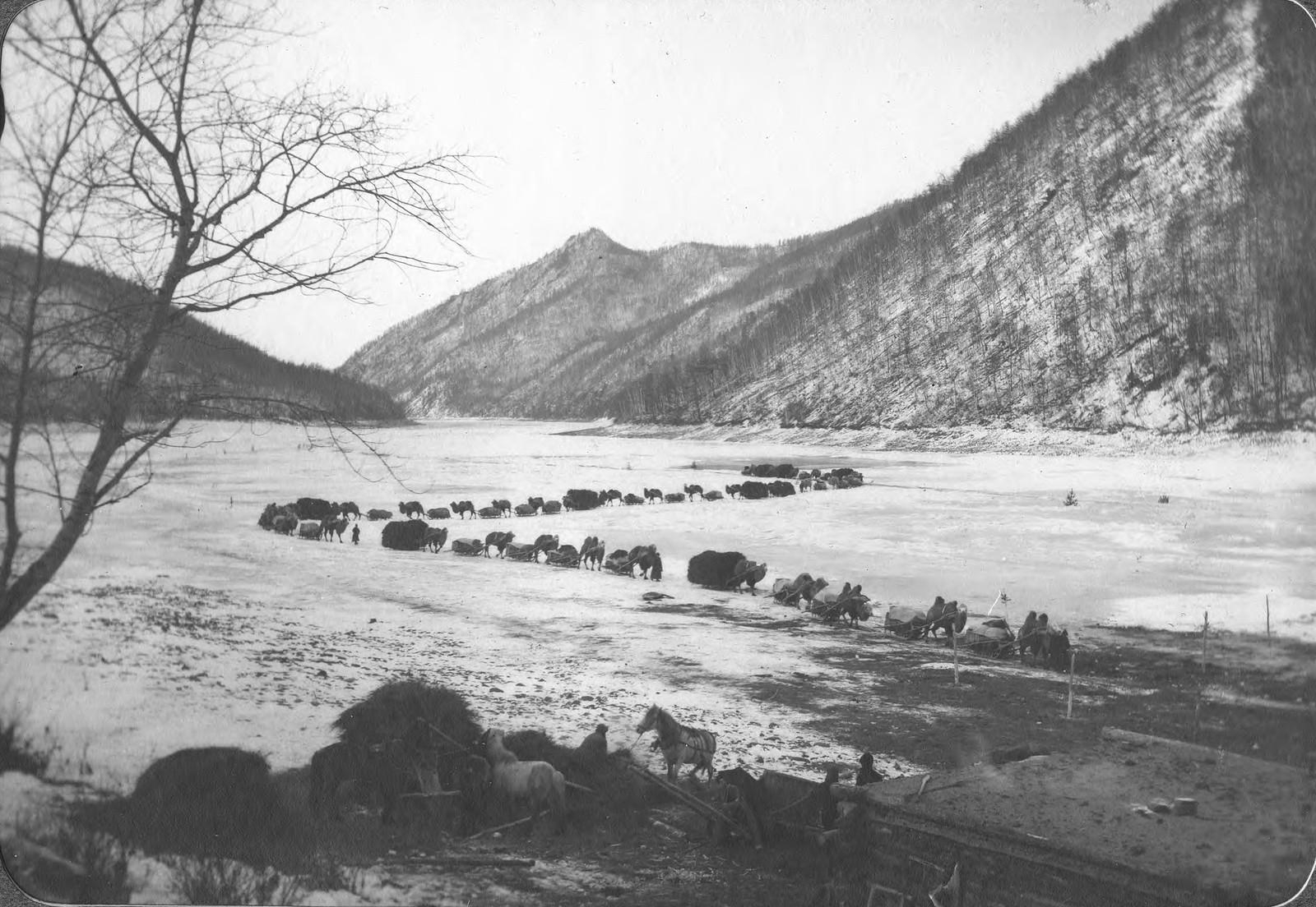Движение каравана верблюдов по льду реки Зеи близ устья реки Гилюй.