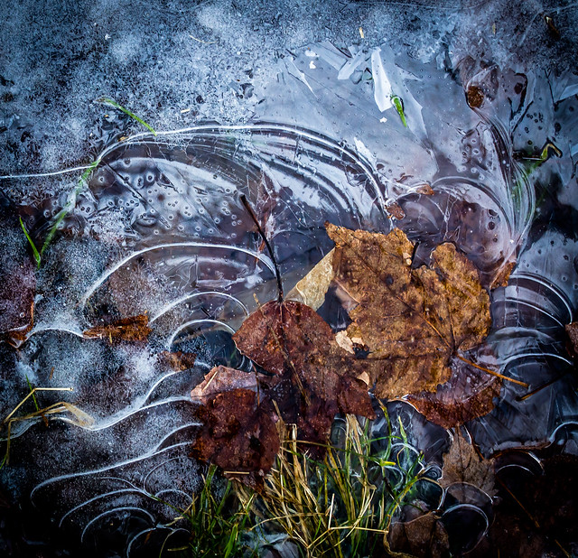 ice, leaves, grass