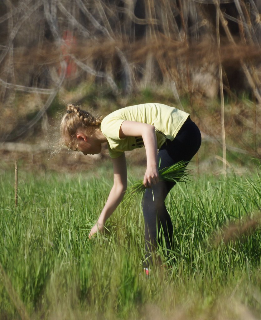 Collecting grass
