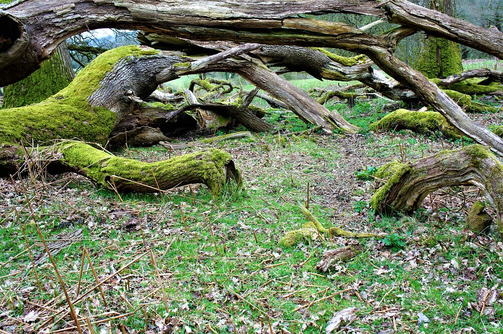 Collapsed Branches