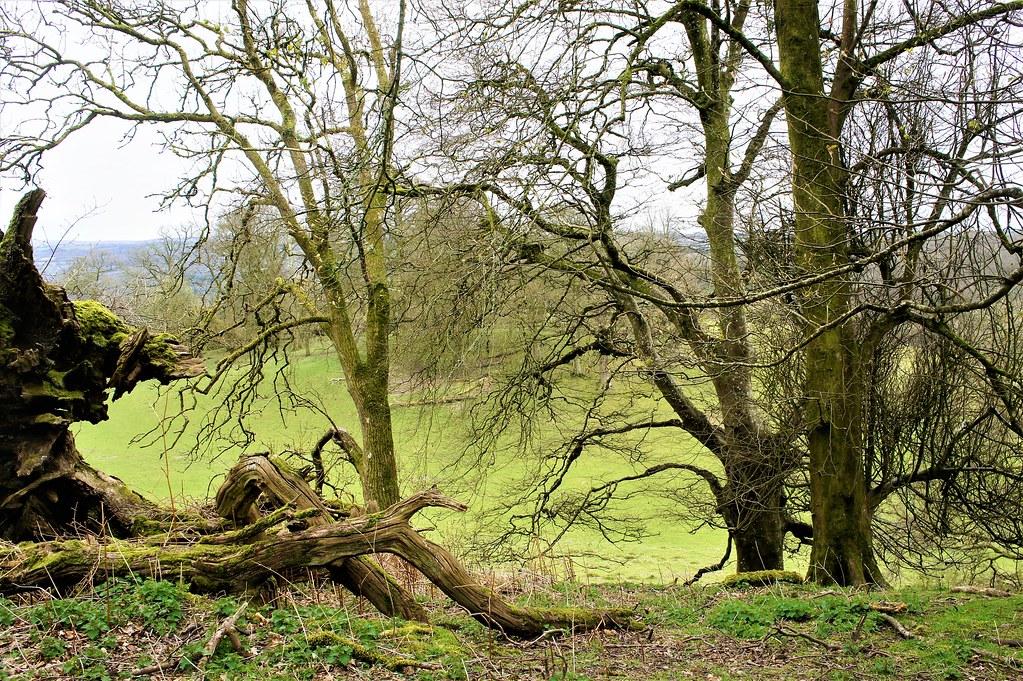 Field & Woodlands