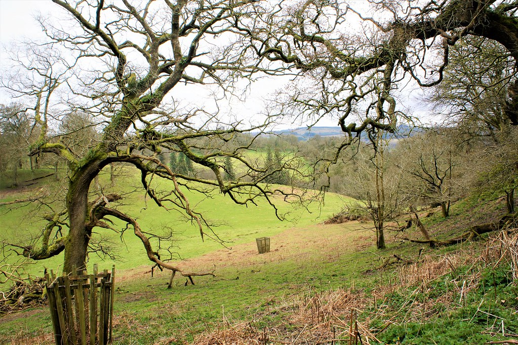 Woodlands & Field