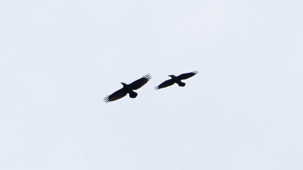 Pendle Hill Ravens