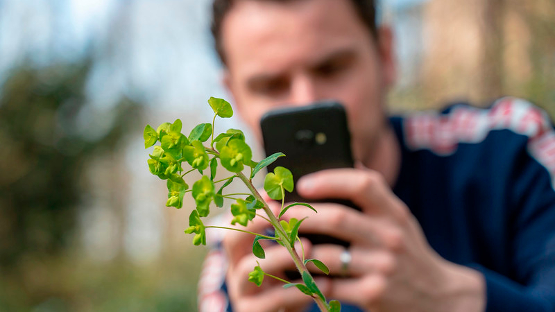 A man taking a picture of a plant