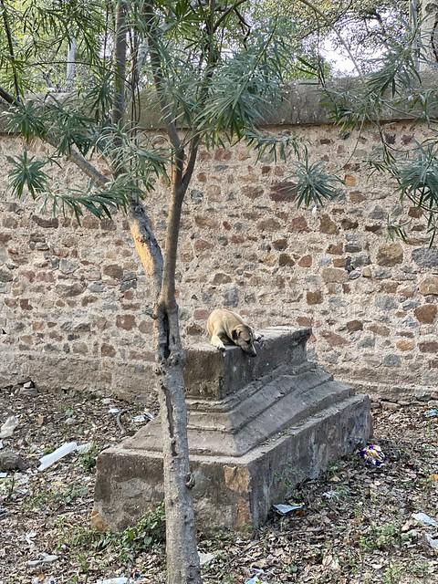City Landmark - Unknown Grave, Near Humayun's Tomb