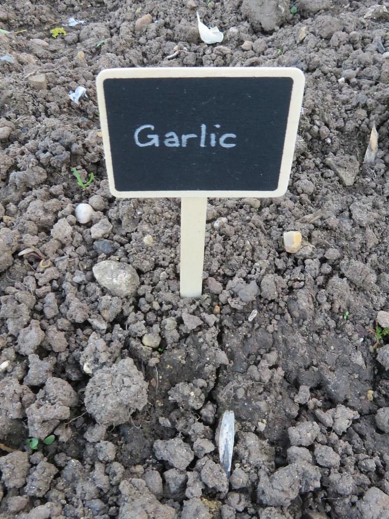 Garlic Sensory Garden Oakham Castle New Funded by Lottery Heritage Fund Oakham Rutland