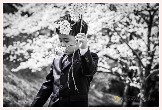 桜と新小学校1年生 モノクロ写真