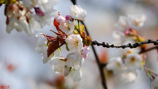 9626 - Flowers