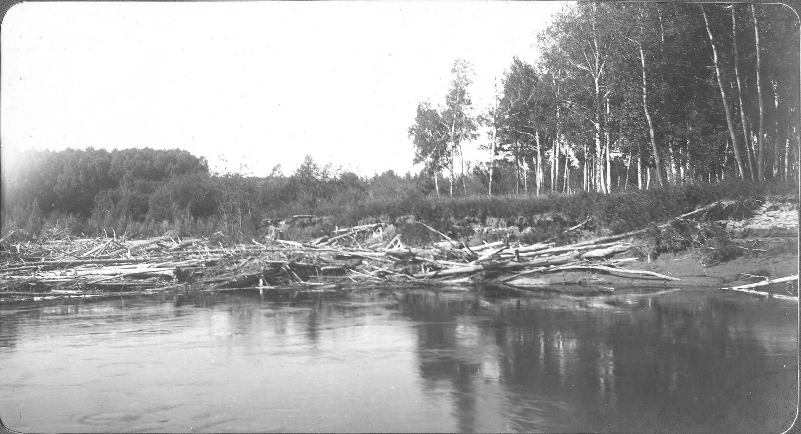 Вид лесных завалов у берега реки Селемджи