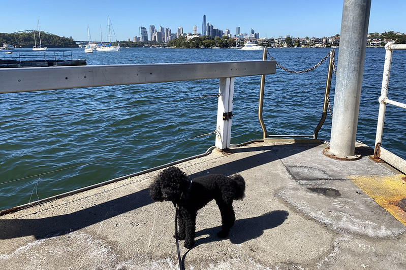 Scully at Greenwich Pt Wharf