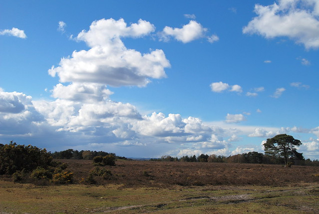 The New Forest - Admiring the Clouds Rather Than the Crowds!