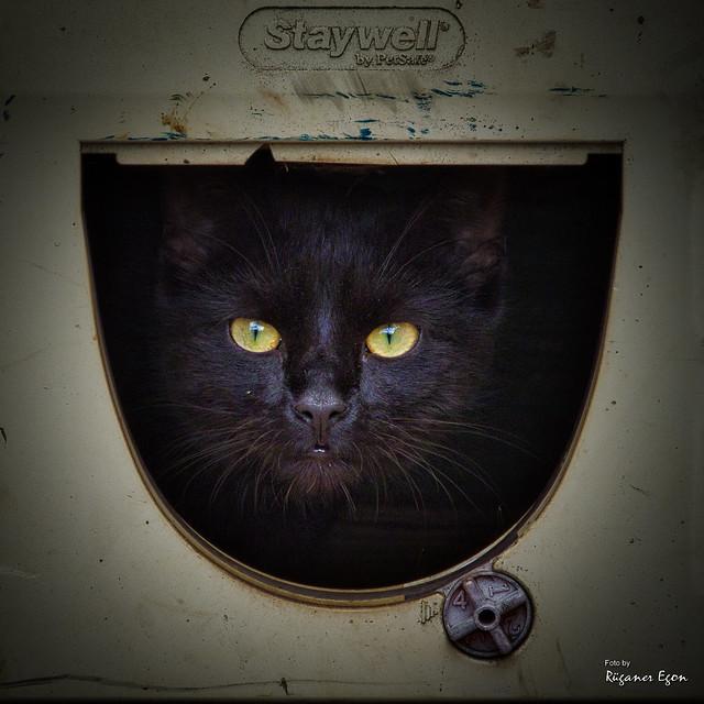 Katzenklappe  (Explore)
