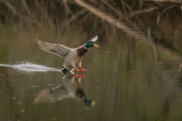Perfect landing!