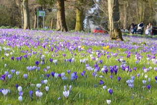Spring flowers at Ashton park | by Tony Worrall