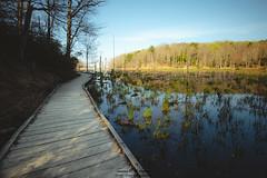Calvert Cliffs Wetlands and Boardwalk