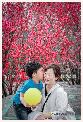 満開のハナモモ ママにキスをする少年