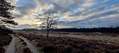 A very cold walk this morning II