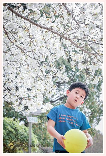 桜の花の下でボール遊びをする男の子