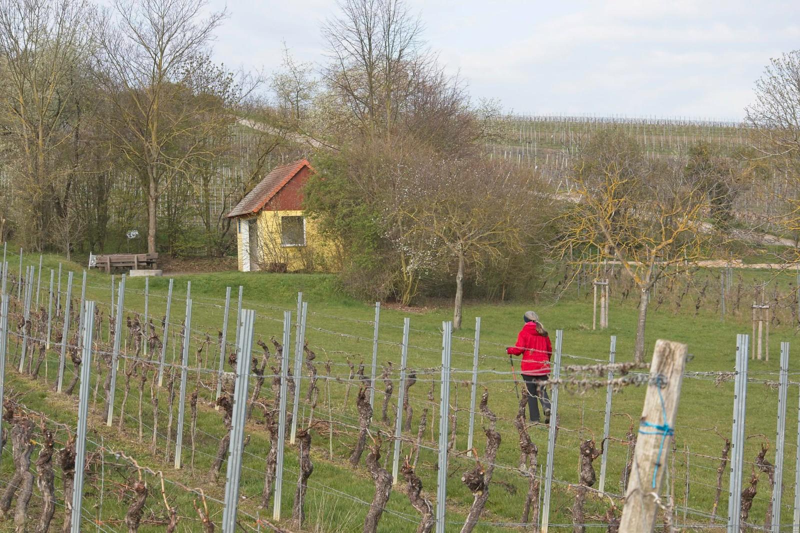 Schutzhütte am Engelborn bei Bechtolsheim