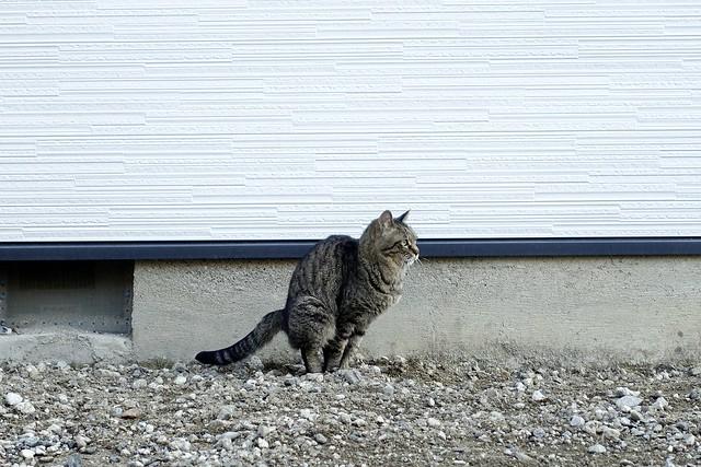 Today's Cat@2021−04−15