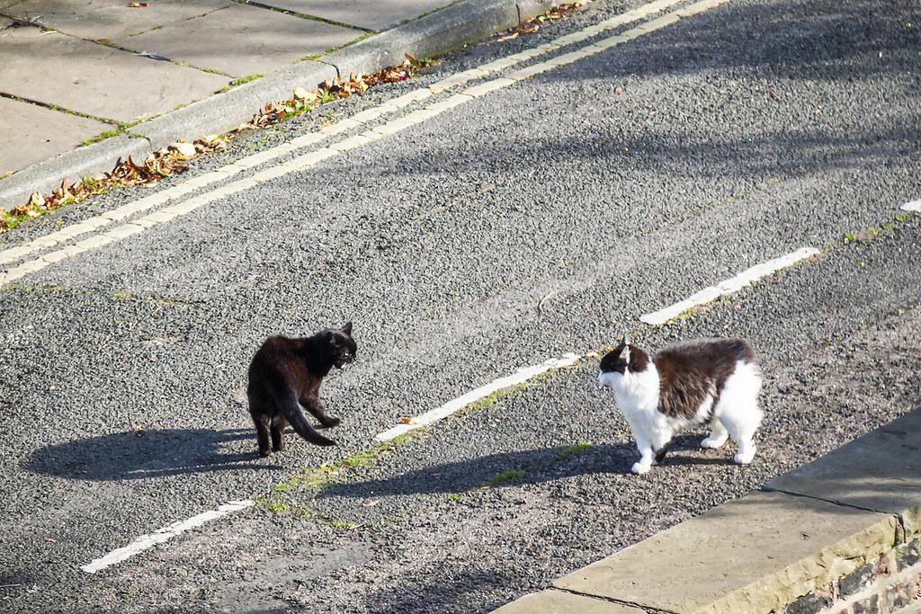 20210415_F0001: A feline street face-off