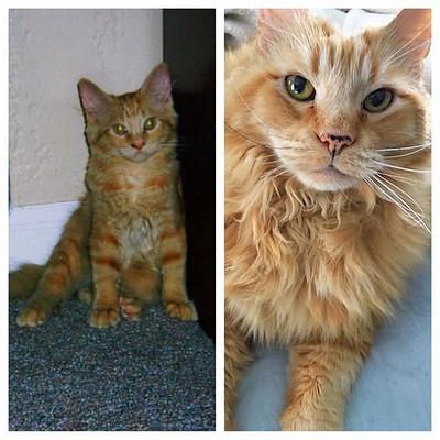 Jasper kitten to 15
