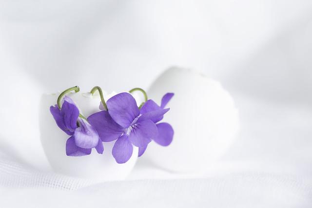 15/30: Spring surprise...