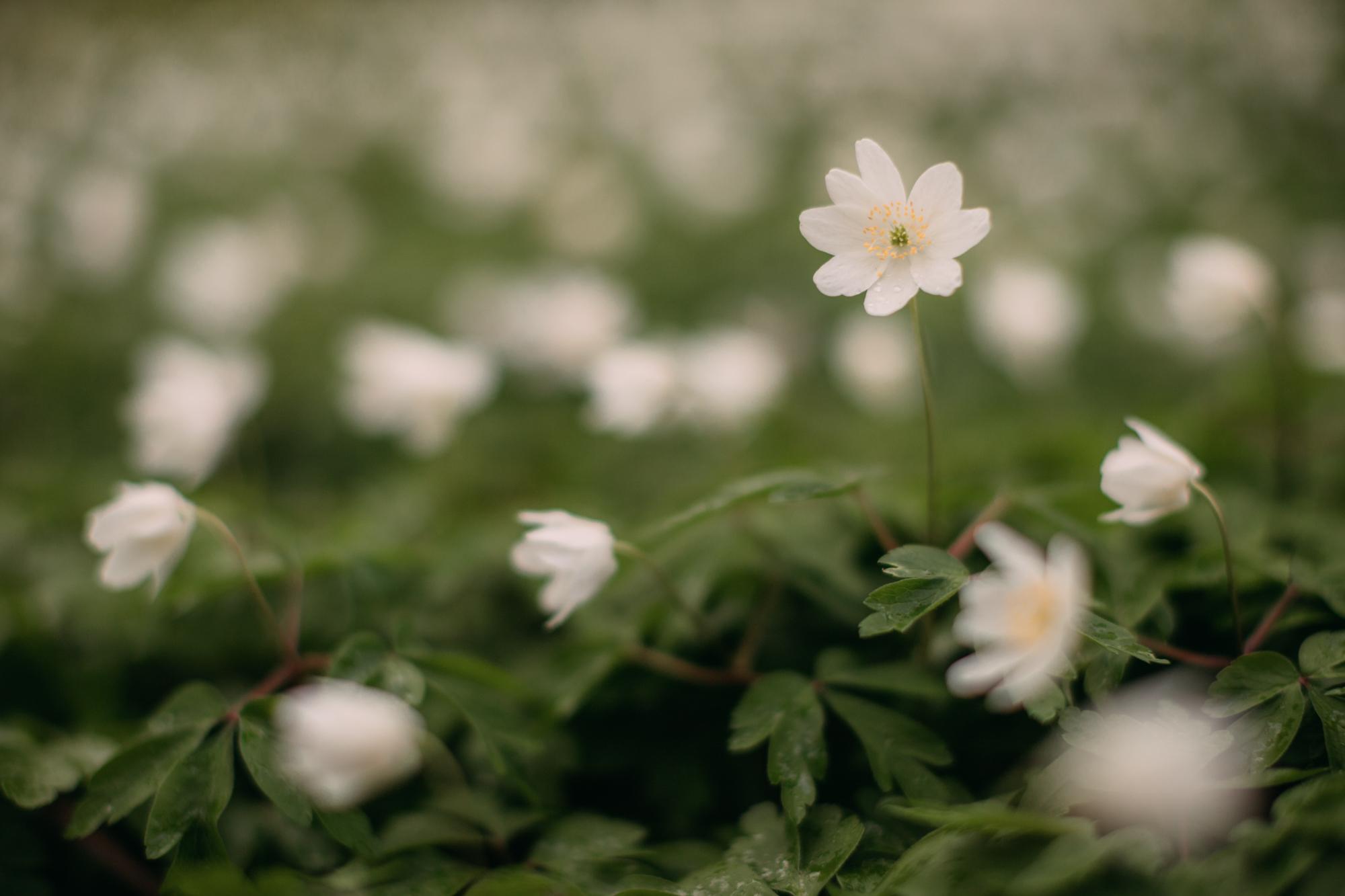 april flowers-35