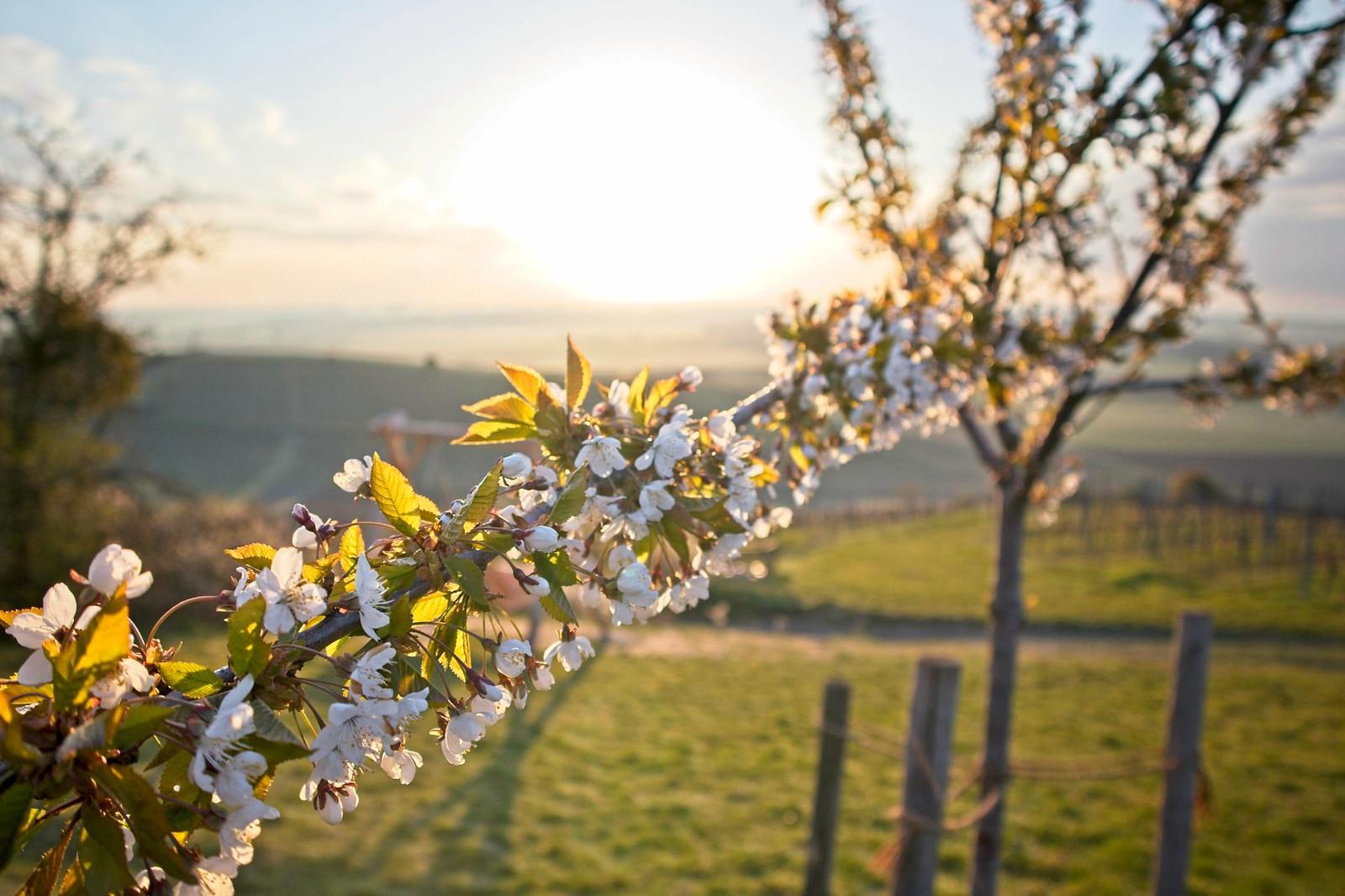 Frühlingssonne am Petersberg