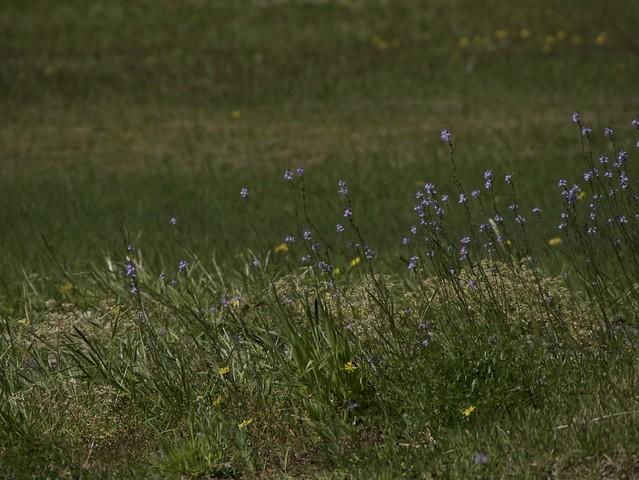 i fiori minuscoli in campi