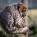 "<p><a href=""https://www.flickr.com/people/horton-photography/"">t_horton</a> posted a photo:</p>  <p><a href=""https://www.flickr.com/photos/horton-photography/51117639516/"" title=""Sad Monkey""><img src=""https://live.staticflickr.com/65535/51117639516_416821872a_m.jpg"" width=""240"" height=""152"" alt=""Sad Monkey"" /></a></p>"