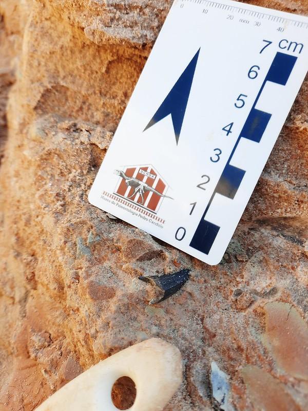 Localização de fóssil