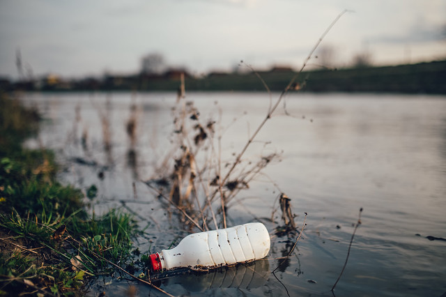 Close-up of a plastic bottle stuck in between the plants at the shallow end of a river