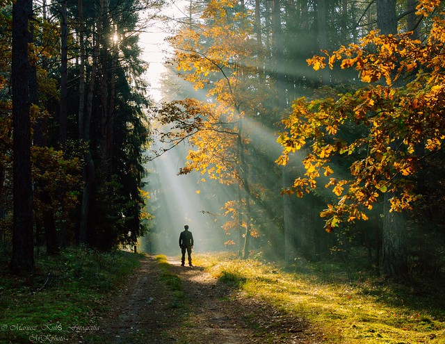 Man in the morning forest.