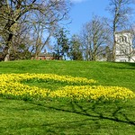 Giant yellow 'G' at Avenham Park