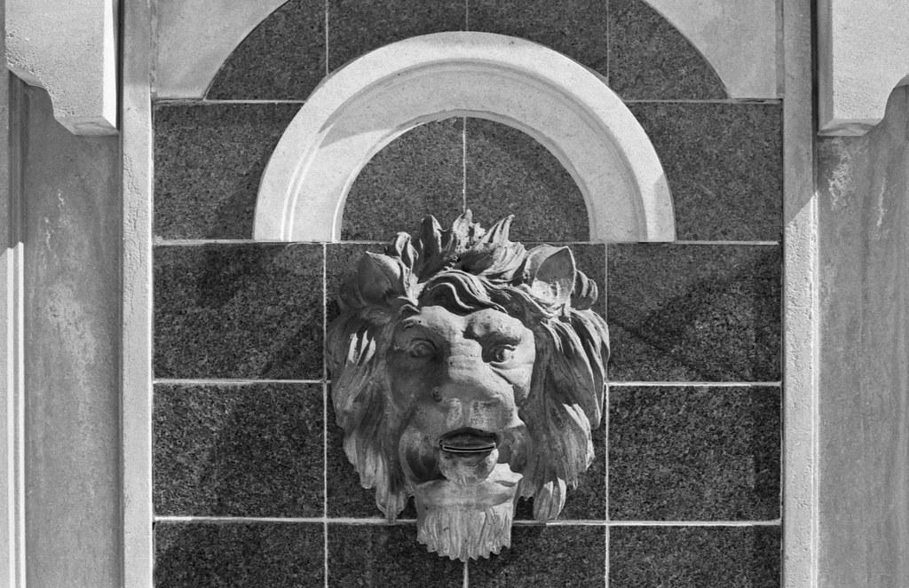 Bronze Lion Head