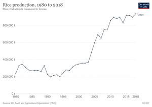 Türkiye'de Yıllara Göre Pirinç Üretimi