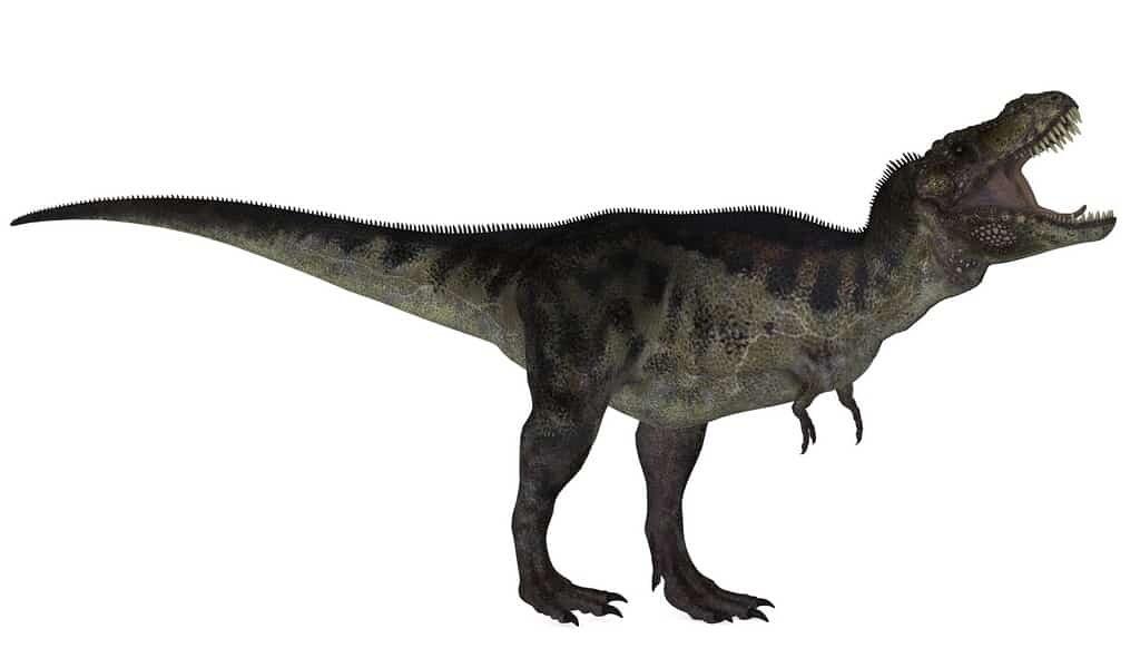 il-y-a-lontemps-les-tyrannosaures-parcouraient-la-terre