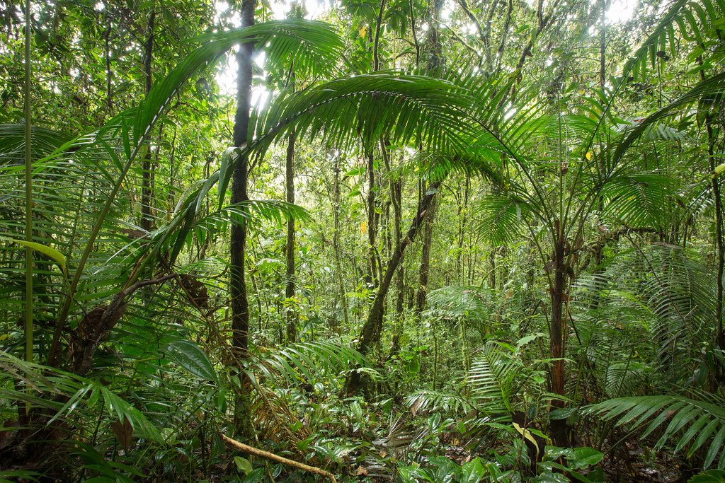 Sub-Andean rainforest