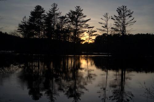 sunset ice frozen reflection tree silhouette pond lake stearnspond haroldparker massachusetts sky cloud skyscape evening night nature landscape color golden