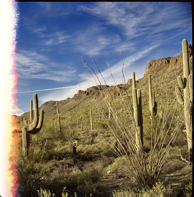 Saguaro Nat'l Park, AZ