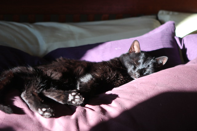 Snoozing in the afternoon sun