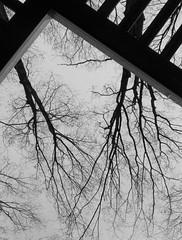 Racines de nos toits