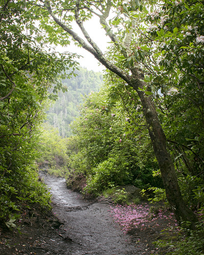 Smokey Mountain Alum Cave Trail