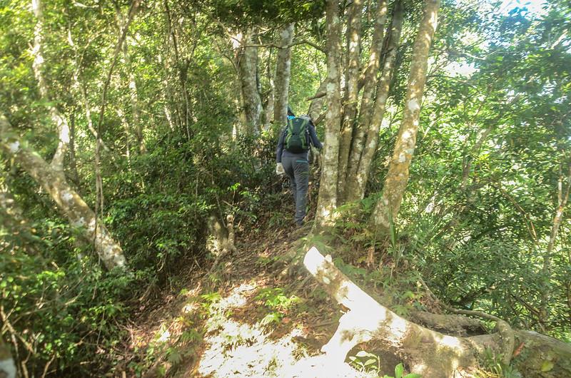 久武山東峰東稜稜線山徑 (1)
