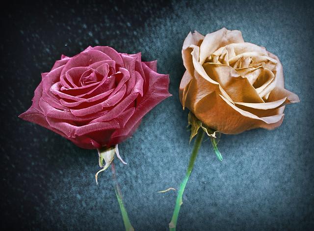 Roses and Denim