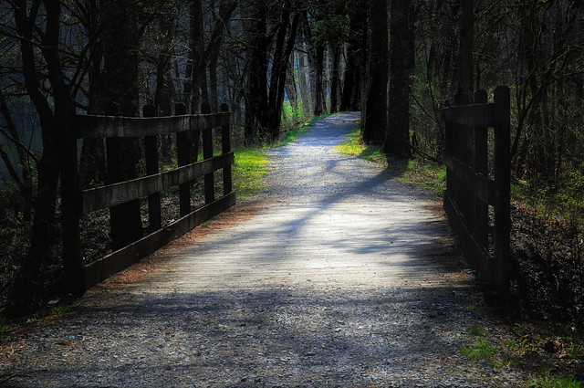 The path through the woods.